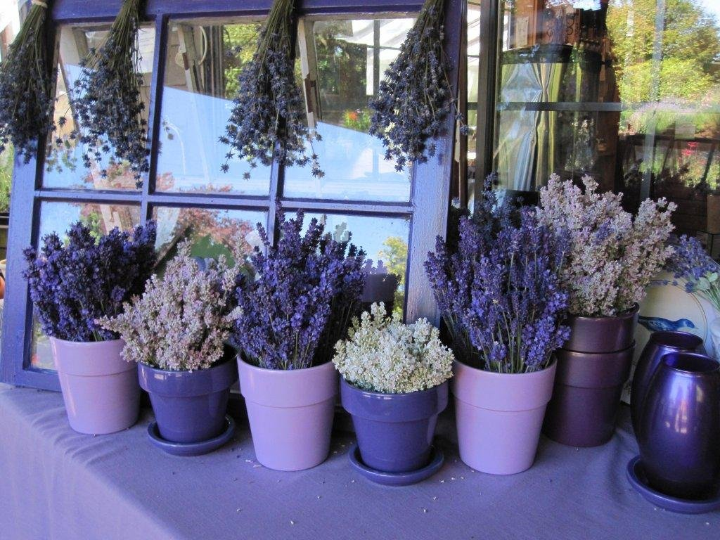 Garden Tour & Gift Shop | Barn Owl Nursery